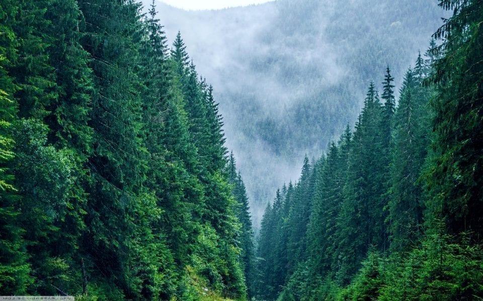 - padure din muntii carpati 960x600 - Forestierii sunt supărați din cauza inițiativei legislative în domeniul pădurilor