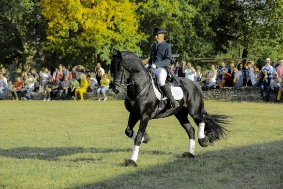 - 12 585x390 - FOTO: Spectacol ecvestru de top pentru 12.000 de spectatori la Karpatia Horse Show