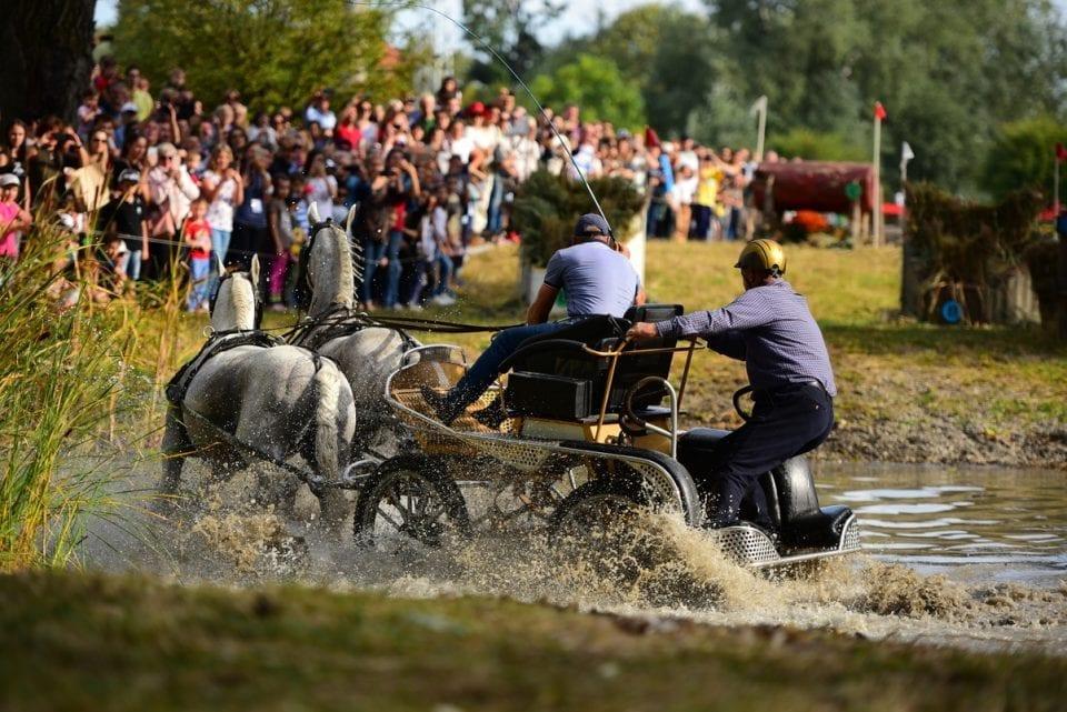 - 2 1 960x641 - FOTO: Spectacol ecvestru de top pentru 12.000 de spectatori la Karpatia Horse Show
