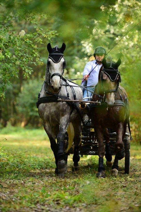 - 3 1 585x876 - FOTO: Spectacol ecvestru de top pentru 12.000 de spectatori la Karpatia Horse Show