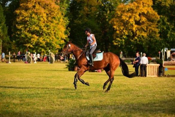 - 4 1 585x390 - FOTO: Spectacol ecvestru de top pentru 12.000 de spectatori la Karpatia Horse Show