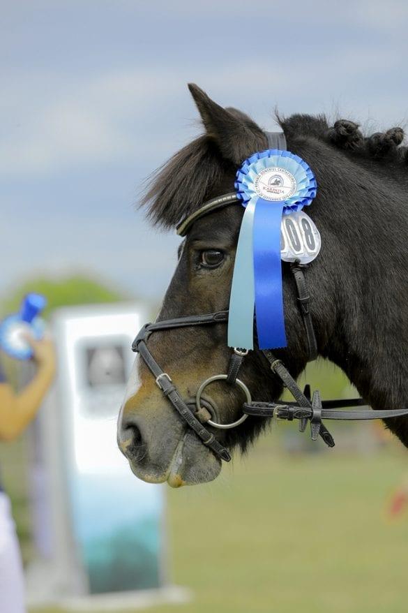 - 6 1 585x878 - FOTO: Spectacol ecvestru de top pentru 12.000 de spectatori la Karpatia Horse Show