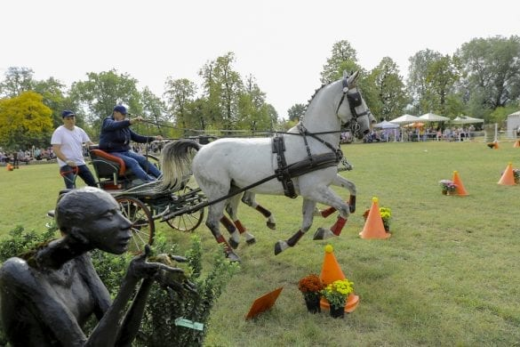 - 7 1 585x390 - FOTO: Spectacol ecvestru de top pentru 12.000 de spectatori la Karpatia Horse Show
