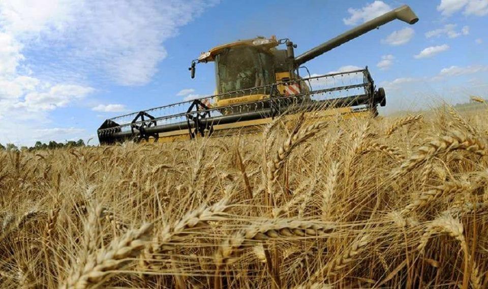 ministrul agriculturii: avem pregătite textele pentru rechiziţii şi pentru suspendarea exportului de cereale - grau 960x569 - Ministrul Agriculturii: avem pregătite textele pentru rechiziţii şi pentru suspendarea exportului de cereale